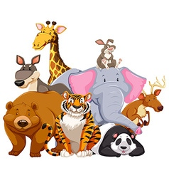 Animals characters on white vector