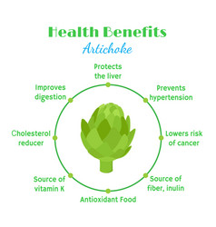Artichokes health benefit organic farm product vector