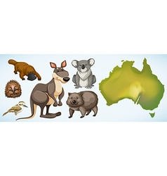 Different wild animals in Australia vector