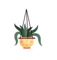 Green decorative hanging indoor house plant vector