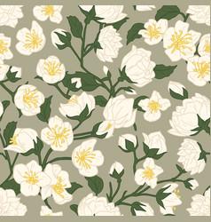 seamless pattern blossomed white jasmine vector image