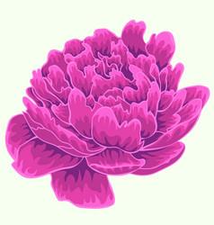 violet peonyisolated peony single peony vector image