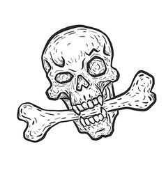 Skull with bone vector image vector image
