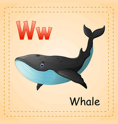 animals alphabet w is for whale vector image