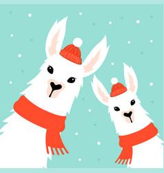 christmas card with llama vector image