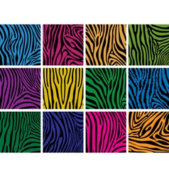 colorful skin textures of zebra vector image