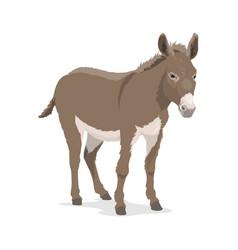 Donkey mule or ass farm animal beast burden vector