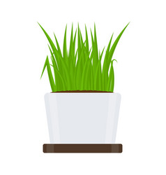 green grass in pot isolated vector image