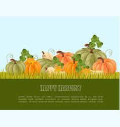 pumpkins harvest autumn seasonal banner vector image