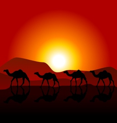Silhouettes of caravan of camels on desert sunset vector