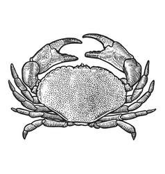 crab drawing engraving ink line a vector image