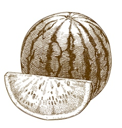 engraving watermelon and slice vector image vector image
