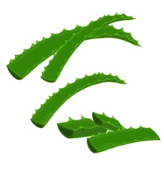 Aloe-vera vector