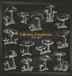 Collection of mushrooms in sketch style on a dark vector image