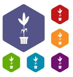 Decoration plant on pot icons set vector