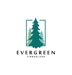 pines tree logo design templateevergreen vector image