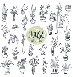 collection of house plants in pots vector image