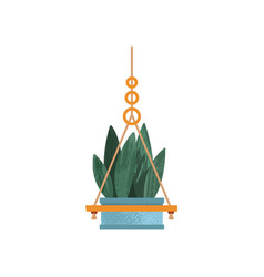 Hanging house plant elegant home or office decor vector