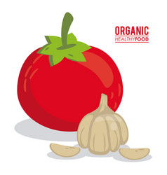Organic healthy food tomato and garlic vector