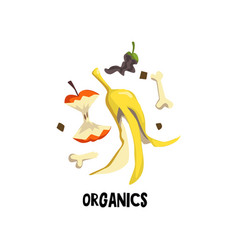 organic litter bone peel of banana and stub of vector image