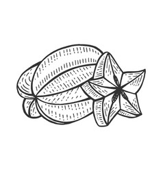 carambola fruit sketch engraving vector image