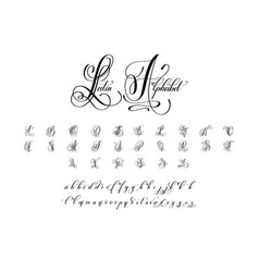 Hand written luxury latin alphabet design vector