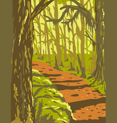 Hoh rainforest in olympic national park vector