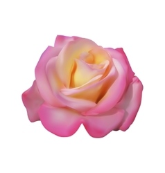 Pink delicate Rose vector image