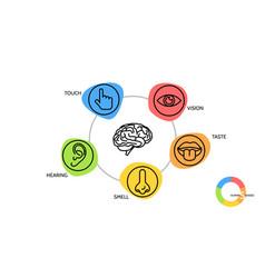 Two sets icons representing five senses vector