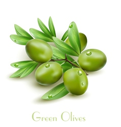 background with green olives isolated vector image vector image