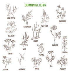 Carminative herbs hand drawn set vector