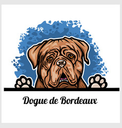 Color dog head dogue de bordeaux breed on white vector