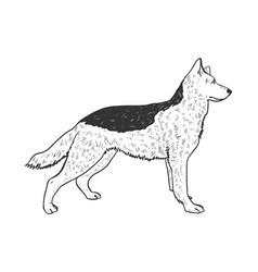 dog shepherd sketch engraving vector image
