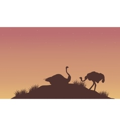 Silhouette of ostrich at afternoon vector