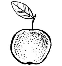Apple Sketch Hand Draw vector image