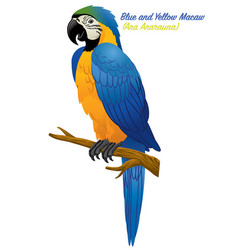 blue and gold macaw bird vector image