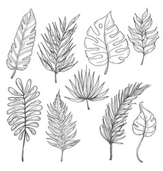 set of tropical leaves vector image