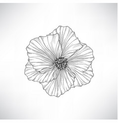 flower isolated floral engraving set vector image