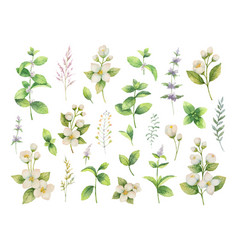 hand drawn watercolor set of herbs and vector image vector image