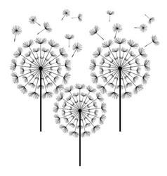 black dandelion isolated on white background vector image