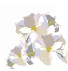 Vintage Delicate White geranium Flower vector image vector image
