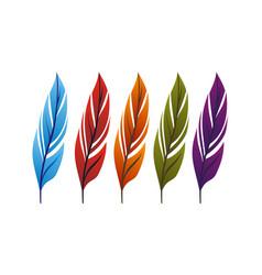 Feather logo design template vector
