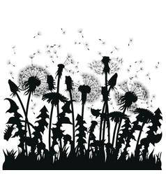 field dandelion flowers black silhouettes vector image