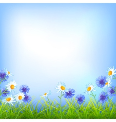 Field flowers daisy cornflower grass background vector image