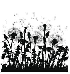 Field of dandelion flowers black silhouettes of vector
