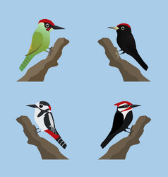 Four cute woodpeckers vector