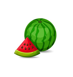 Fresh watermelon vector