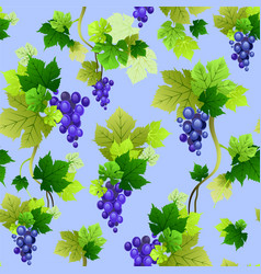 Grapes pattern on blue background vector