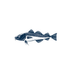 scumbridae fish isolated freshwater codfish icon vector image
