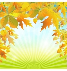Autumn leaves on the abstract background of the vector